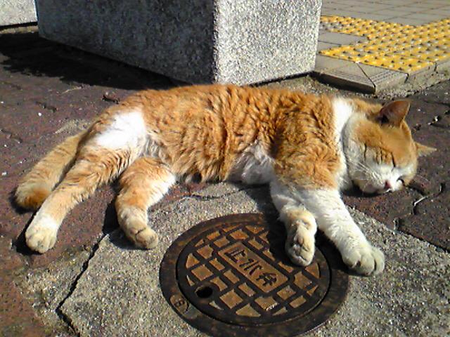 朝からネコが【寝転ぶ】(猫ろぶ?)/JR宇部駅(山口県宇部市)で出会った平和な風景